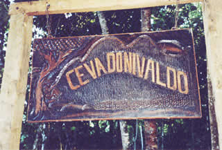 Ceva do Nivaldo.
